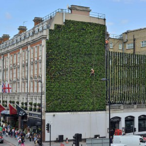Londens Living wall bij het Rubens at the Palace Hotel