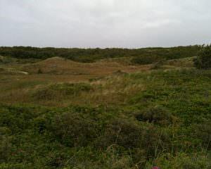 Duinen rondom Skagen