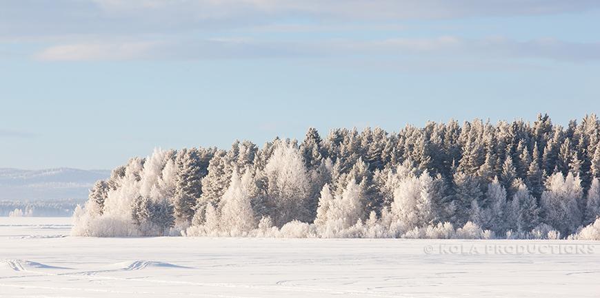 Bevroren bomen in Orsa, Zweden