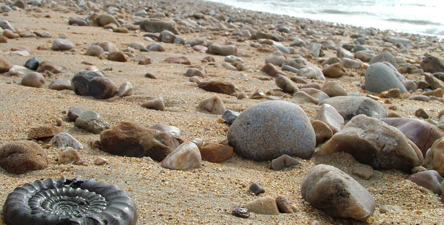Fossiel op zandstrand Jurassic Coast in Dorset Engeland