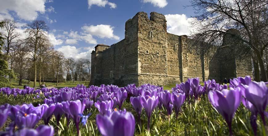 Colchester Castle crocus - Visit Colchester