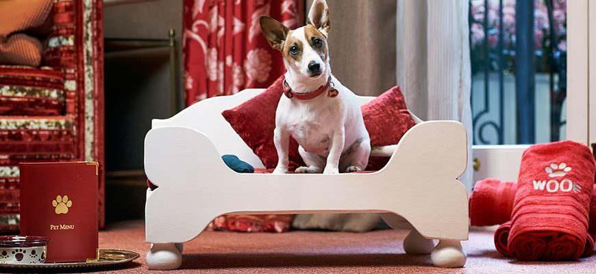 Egerton House Hotel Knightsbridge Londen hondvriendelijk