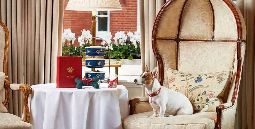 Hondvriendelijk hotel Engeland Egerton House in Londen